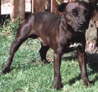 Schwabs Patterdale Terrier Great Dogs In A Tiny Package